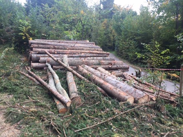 fällen von bäumen auf privatgrundstücken